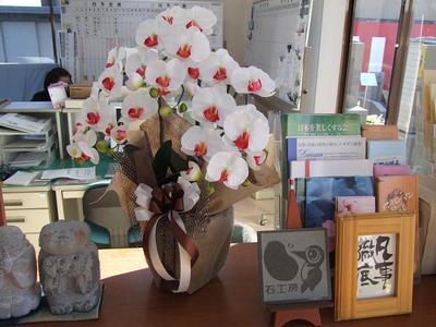 光触媒胡蝶蘭